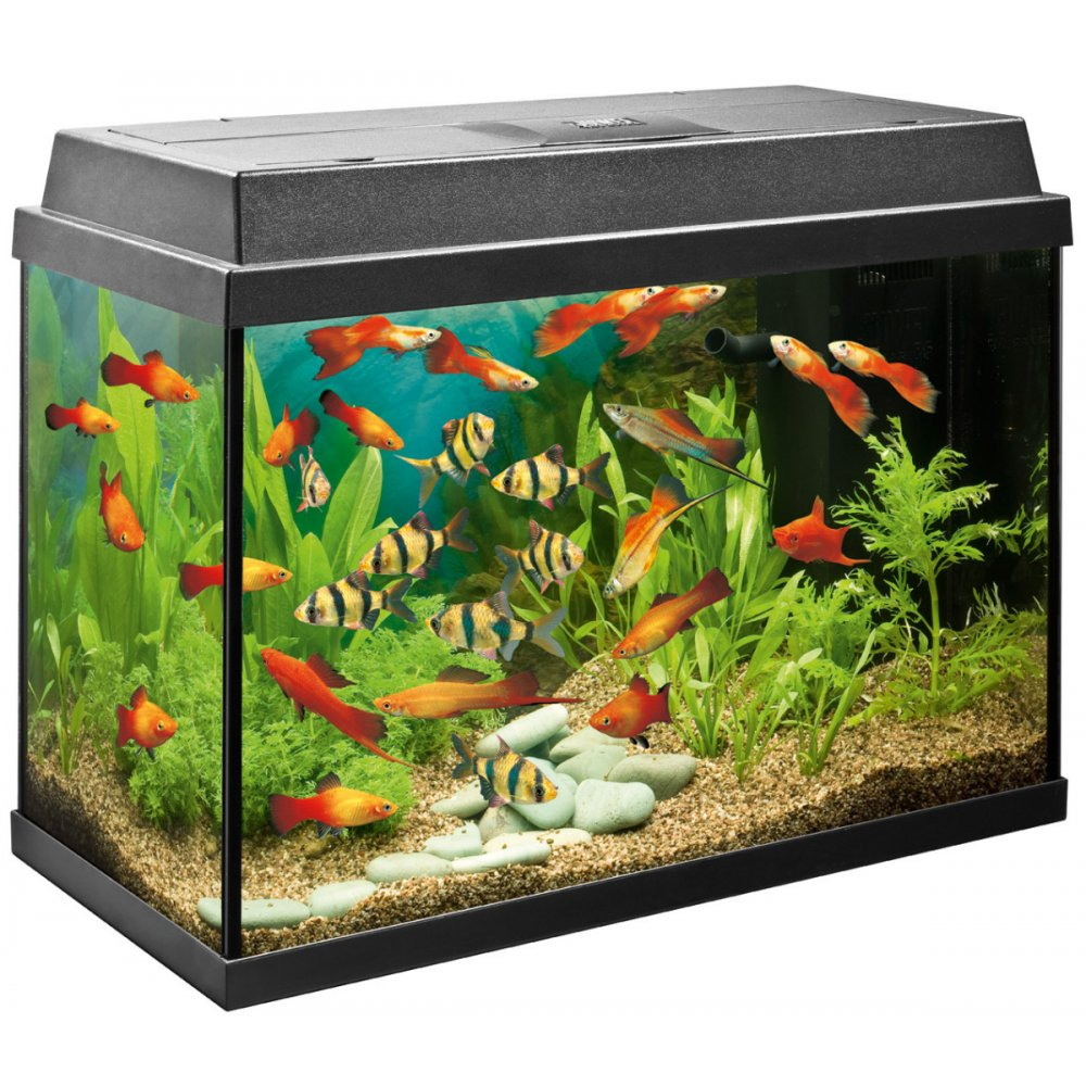 Aquarium Equipment : ... Aquariums & Goldfish Bowls ? Juwel Aquarium Uk Rekord 600 Aquarium