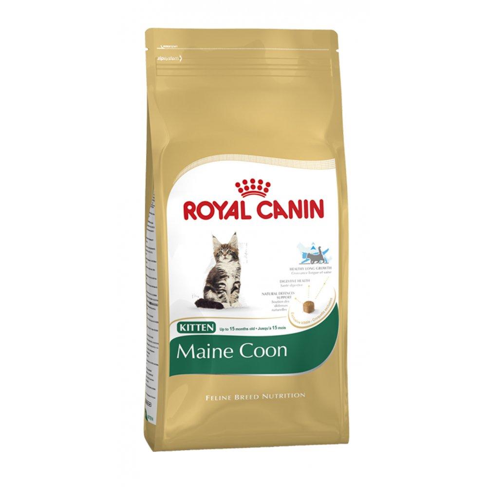 buy royal canin maine coon kitten food 10kg. Black Bedroom Furniture Sets. Home Design Ideas