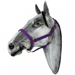 Langdale Headcollar for Horses - Size Cob (Purple)
