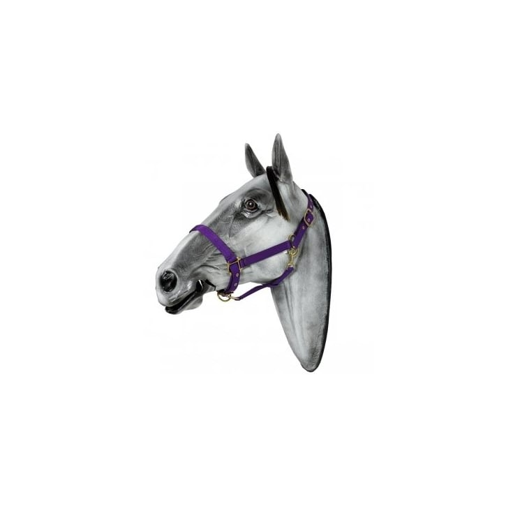 Elico Langdale Headcollar for Horses - Size Pony (Purple)