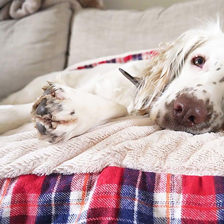 8cff4610bf6cd Rosewood Festive Large Tartan Snuggle Pet Blanket | Feedem