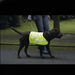 Reflective Dog Coat Yellow Medium