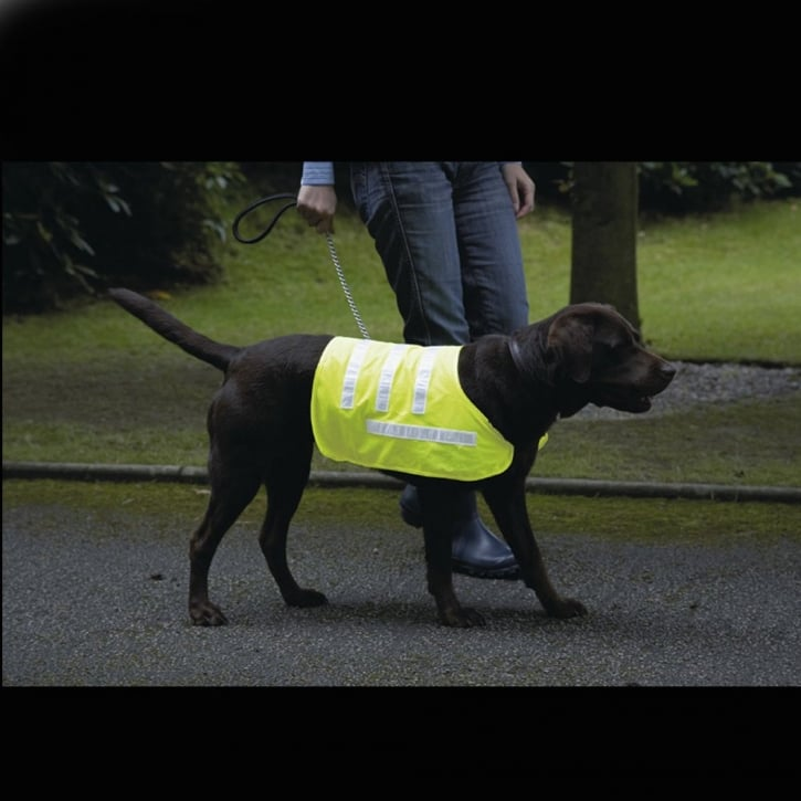 Rosewood Reflective Dog Coat Yellow Small