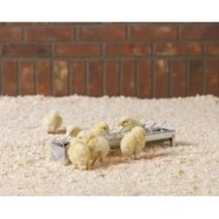 Savic Daisy Chick Trough Feeder 38x7.2x7.7cm